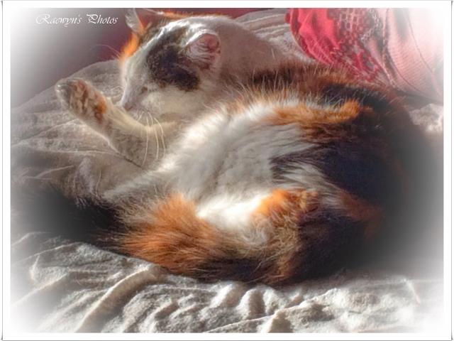 Missy reclining (640x480)