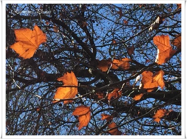 Autumn lights 5 (640x476)