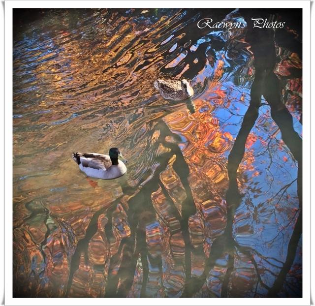 Autumn Reflections 4 (640x622)