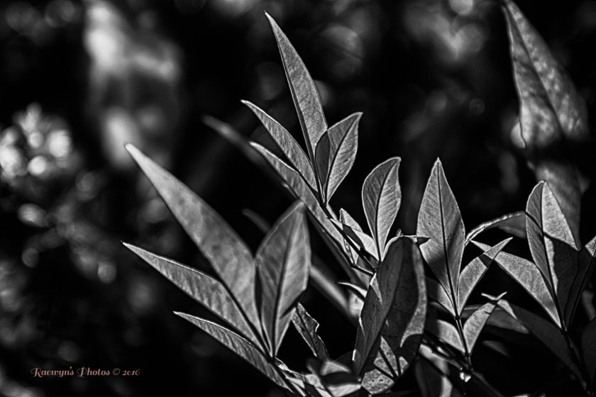 Leaves 6-