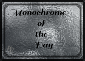 Monochrome of the Day