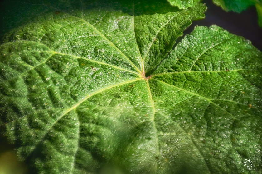 Olive Green-