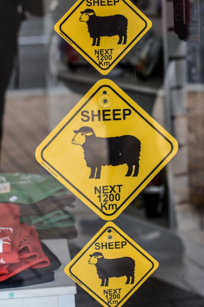 Beware of Sheep-385